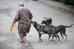 Câinii din Ploiești, otrăviți cu furadan, o substanță interzisă în România